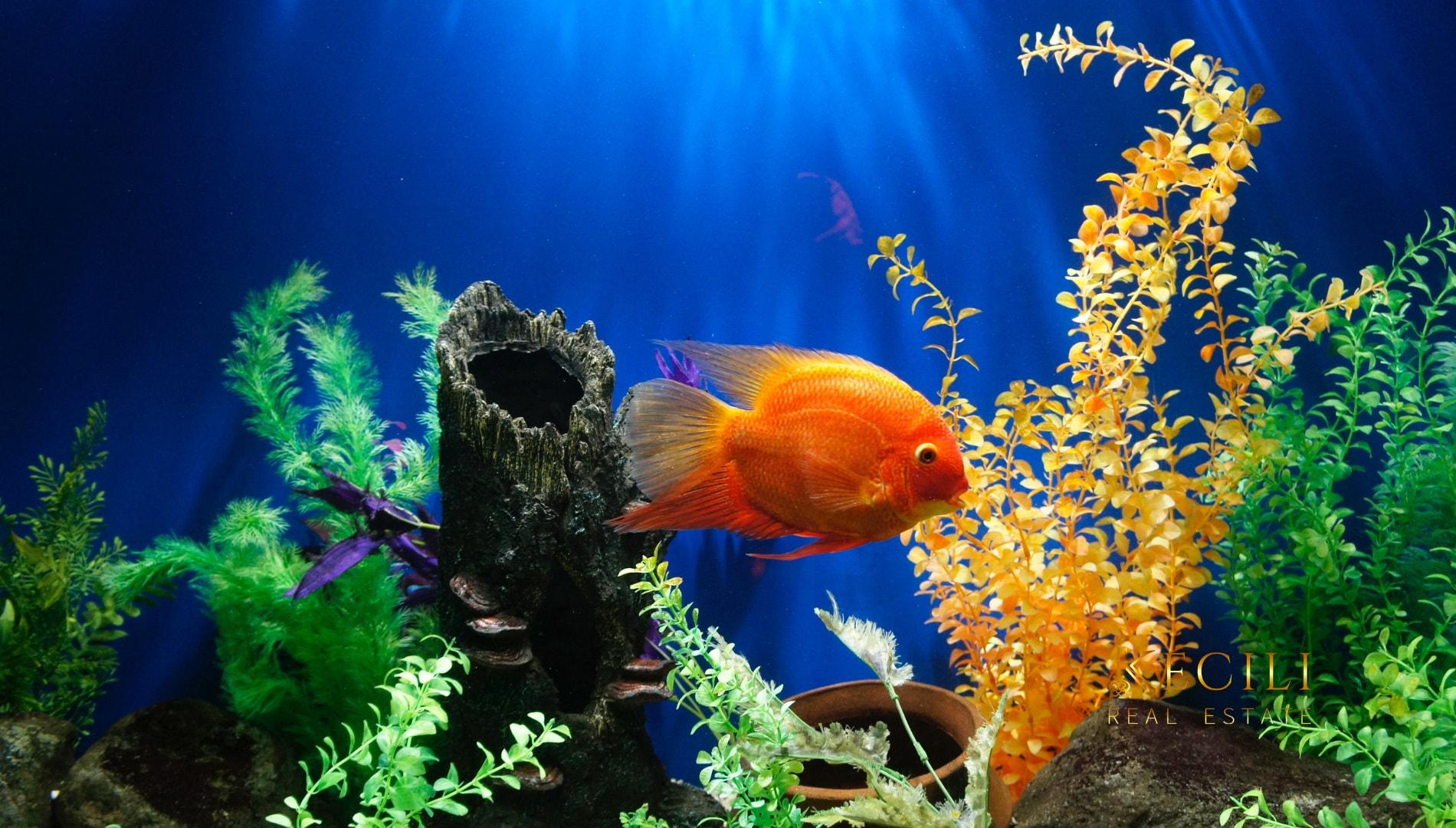 Pêchez-vous dans un aquarium?